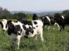 UPA asegura que los ganaderos no notan la subida de precios de la leche